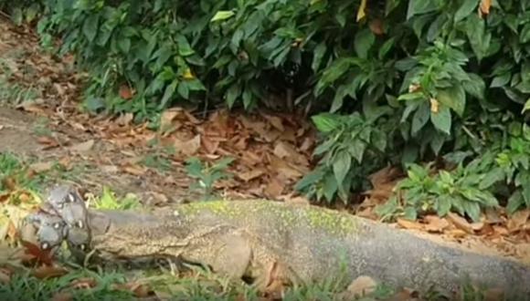 La épica batalla entre una pitón y un enorme lagarto sorprende a miles de usuarios en la red. (Foto: Captura YouTube)