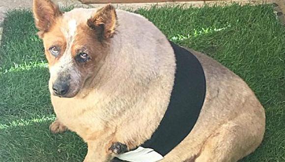 Arbuclke fue abandonado por su familia por su sobrepeso; sin embargo, encontró una familia dispuesto a ayudarle a salvar su vida. (Foto: Instagram/allaboutarbuckle)