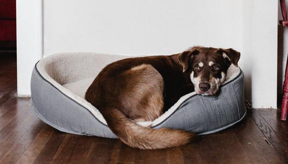 La cama adecuada para tu mascota necesita cumplir con algunos requisitos. (Foto: Pexels)