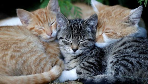 El último martes de febrero se conmemora el Día Mundial de la Esterilización Animal. (Foto: Reuters)