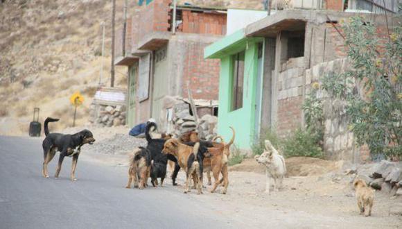 Ordenan matar a perros callejeros de Arequipa por rabia