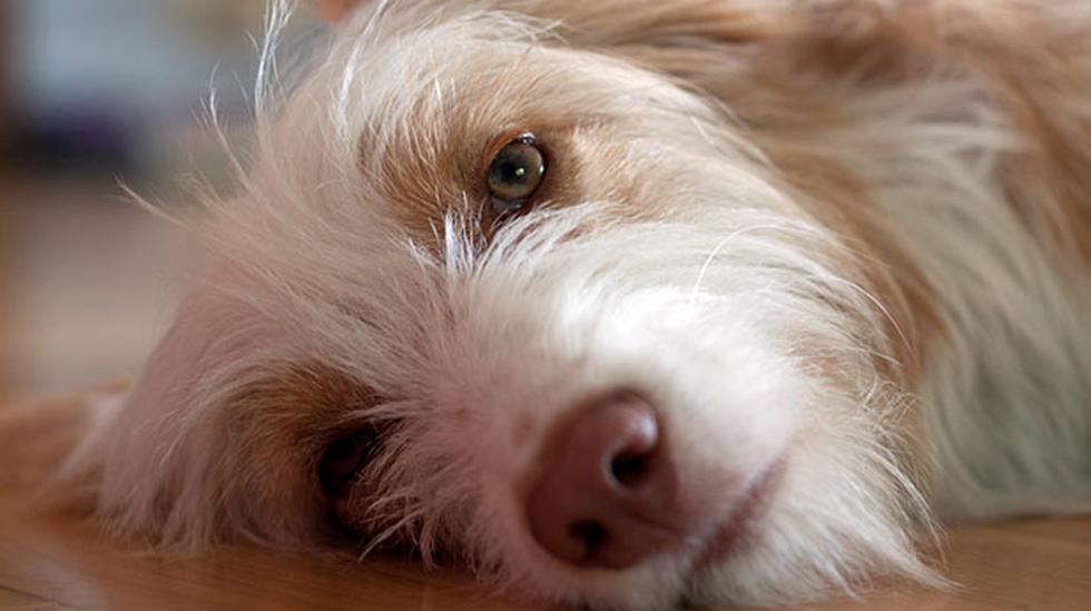 ¿Cómo ayudar a tu perro si se está asfixiando? - 1