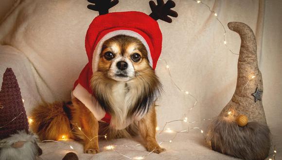 El sonido fuerte de la música o los destellos de las luces de Navidad pueden generar estrés en las mascotas. (Foto: HG-Fotografie / Pixabay)