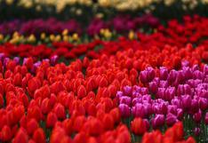 Disfruta de un espectáculo floral único sin moverte de casa