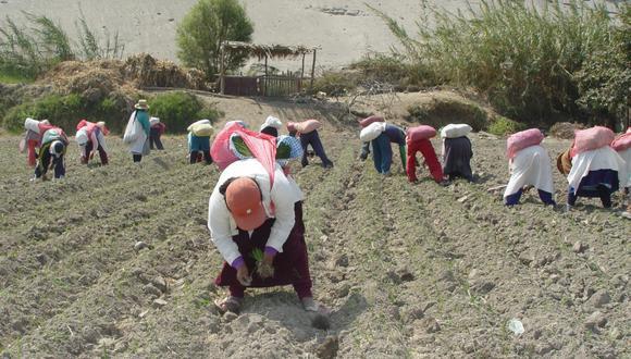 Sector agrario. (Foto: GEC)