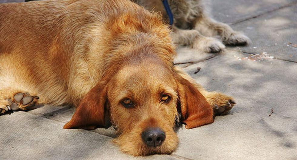 Abandonar a un perro a su suerte también es considerado maltrato animal. (Flickr)