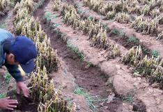 Puno: ausencia de lluvias en el altiplano preocupa a los agricultores