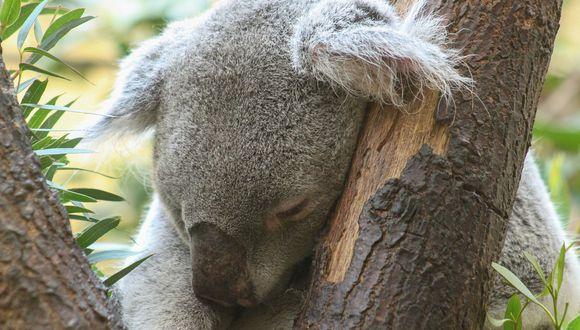 Las altas temperaturas en el país han provocado diversos incendios forestales que han cobrado la vida de cientos de animales. (Foto: Pixabay/ referencial)