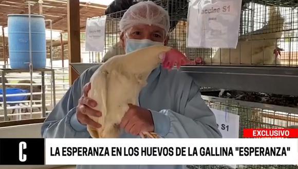 En los huevos de las gallinas se hallaron los anticuerpos que neutralizarían a la proteína del COVID-19. (Cuarto Poder)