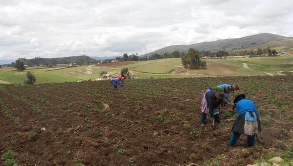 La Comisión de Pueblos Andinos del Congreso de la República aprobó el proyecto que dispone prorrogar 15 años más la moratoria al ingreso de transgénicos al país. (Foto: GEC)