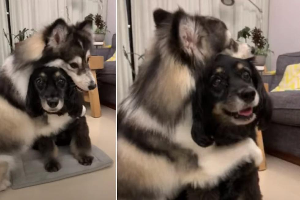 El perro se levantó en dos patas para abrazar a su amigo. (YouTube: ViralHog)