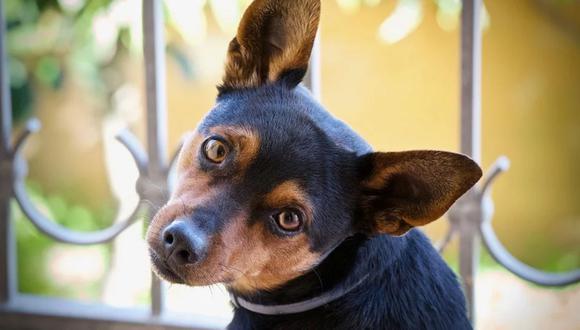 Una regla básica es elegir a tu próximo perro, no por su físico, sino por su personalidad o nivel de energía.