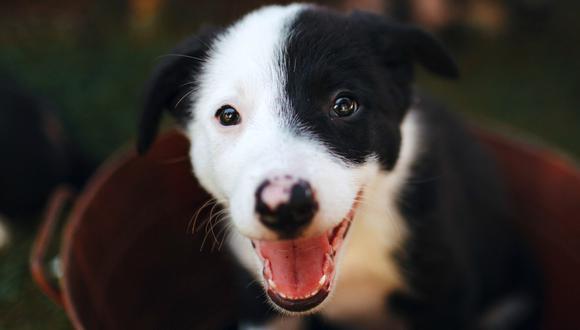 Un buen nombre de perro suele ser corto. (Foto: Helena Lopes-Pexels)