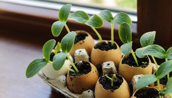 Utiliza la cáscara del huevo para hacer creativas manualidades
