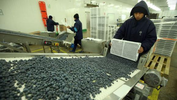 La mayor producción de arándanos impulsó el avance del subsector agrícola en febrero, según datos del Minagri. (Foto: GEC)