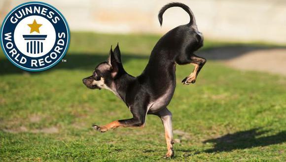 Este es el perro más rápido del mundo en dos patas [VIDEO]