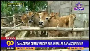 Puente Piedra: ganaderos venden a sus animales tras ser afectados por la pandemia de coronavirus