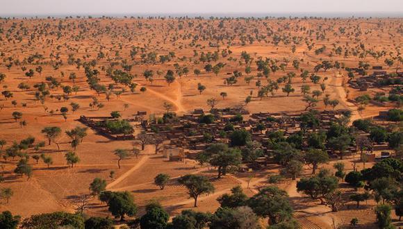 El Sahara y el Sahel tienen muchísimos más árboles de lo que se creía. (MARTIN BRANDT)