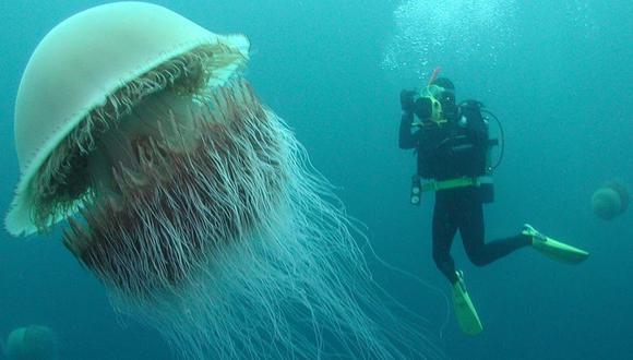 ¿Una extraña medusa gigante ha sido captada por la vista satelital de Google Maps?