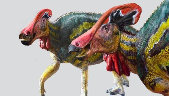 Tlatolophus. (LUIS V. REY)