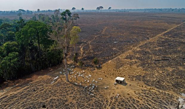 La deforestación, que suele alcanzar su punto máximo en agosto y setiembre, está comenzando a acelerarse. En esta imagen del 2020, parte del daño en el estado de Pará. (Foto: AP)