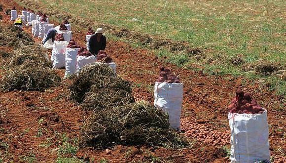 El sector agropecuario creció en 4,7% en enero de 2019. (Foto: USI)