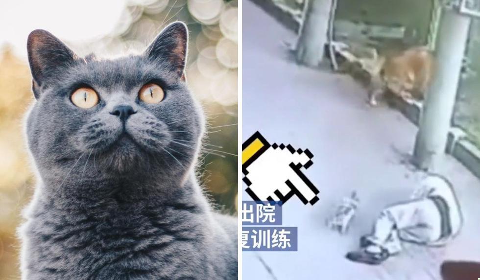 Foto 1 de 3: El hecho tuvo lugar en China. ¡Desliza para ver más imágenes! (The Paper 澎湃新闻 | YouTube)