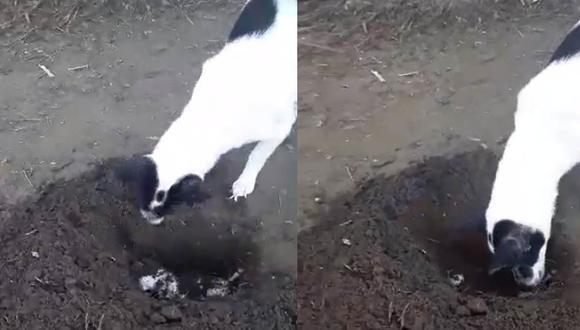 La perra cavó desesperadamente un hoy y empezó a enterrar a su cría que había muerto minutos antes.  Foto: Lenny Rose Ellema