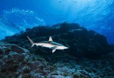 Reserva Nacional Dorsal de Nasca | Así es la primera área natural protegida 100% marina del Perú