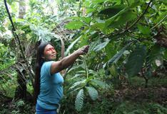 Ecuador: avanza construcción de carretera que amenaza al parque Yasuní y a pueblos indígenas aislados
