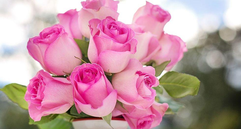 Las rosas son la mejor opción para dar a nuestros seres queridos el próximo 14 de febrero (Foto: Pixabay)