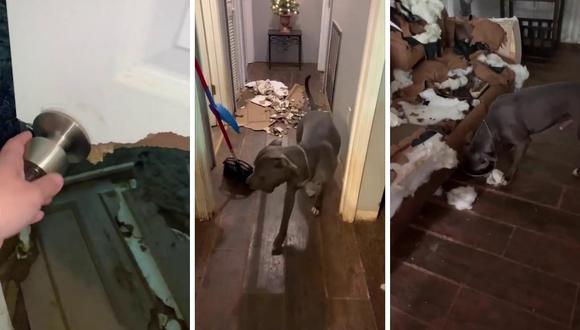 Bo mordió la puerta del cuarto de visitas y ocasionó muchos destrozos. No se sabe a cuánto asciende el monto de los daños. (Foto: Caters Clips | YouTube)