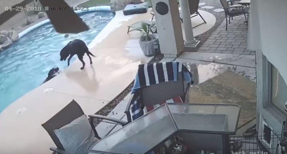 Remus vio que su amigo canino luchaba por salir de la piscina, pero no podía. (YouTube: ViralHog)