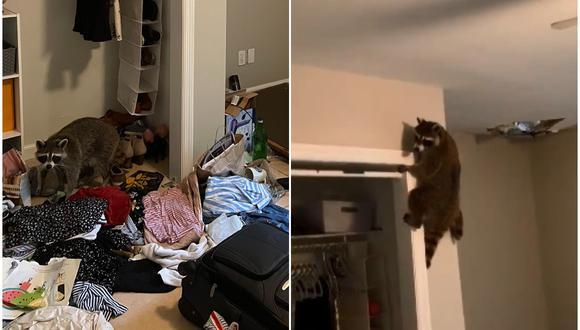 Una familia de mapaches invade el hogar de una estudiante universitaria. (Foto: @haley_iliff / Twitter)