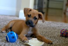 Mascotas: consejos sencillos para aprender a adiestrarlas con cariño y paciencia