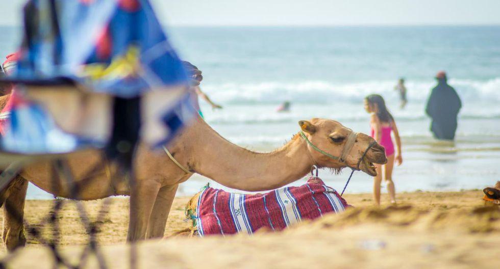 Marruecos o por qué hacer lo impensado, de vez en cuando, por Lorena Salmón.