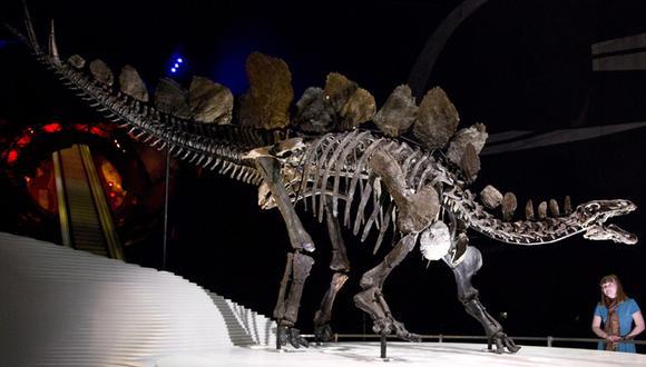 Fósil de un estegosario (Foto: AFP)