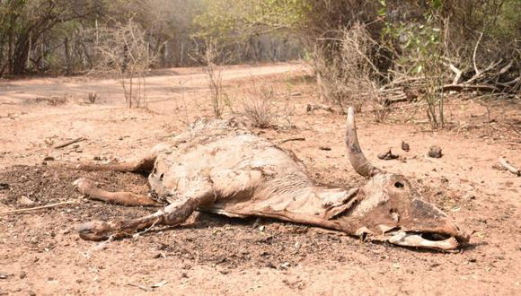 Sequía en Bolivia. Foto: Fundación Nativa.