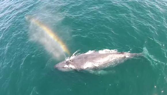 Dron capta ballena justo cuando expulsa bello arcoíris [VIDEO]
