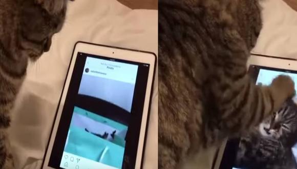 Curioso gato usa y revisa el Instagram como toda una influencer. (Foto: Captura YouTube)