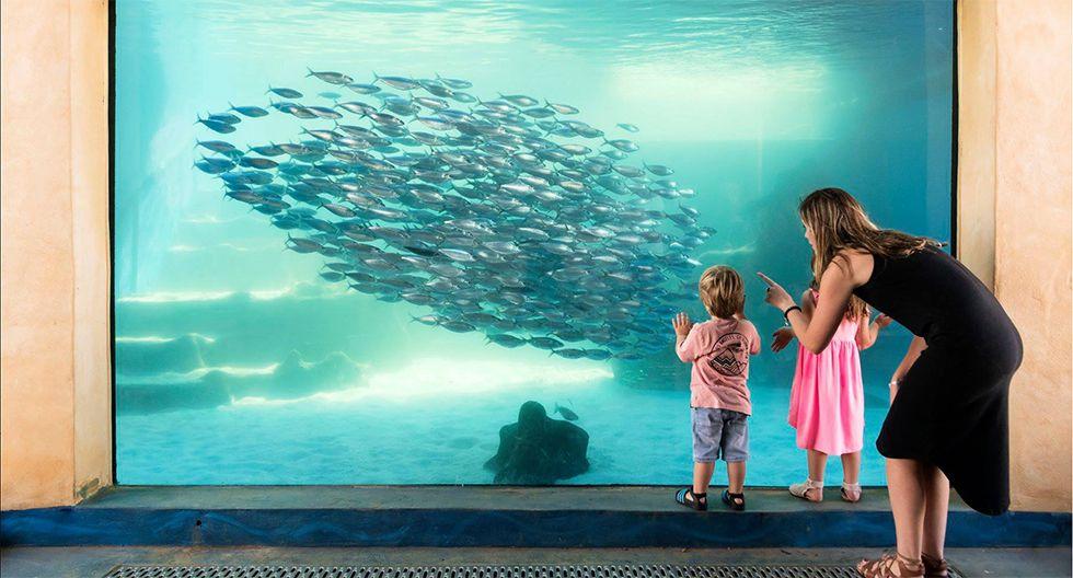 Aqwa (Australia). Dentro del acuario, ubicado al norte de la localidad de Perth, puedes practicar snorkel con tiburones, tortugas gigantes y rayas con la asesoría de un buzo calificado (precio: US$133). Sin embargo, la actividad clásica es recorrer el túnel de acrílico de casi 100 m de largo que permite asombrarse con las casi 400 especies que allí habitan. Ingreso: US$21.