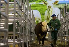 Gases de 90 vacas hacen estallar un establo