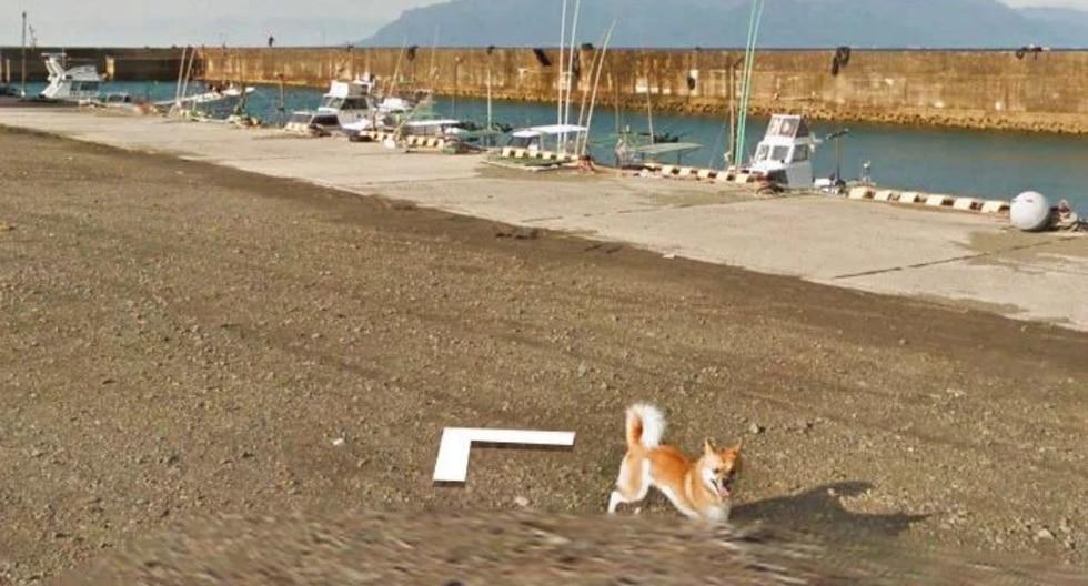 Un adorable pero valiente perro persiguió por varios metros al vehículo del 'Gigante de Internet'. (Foto: Google Street View)