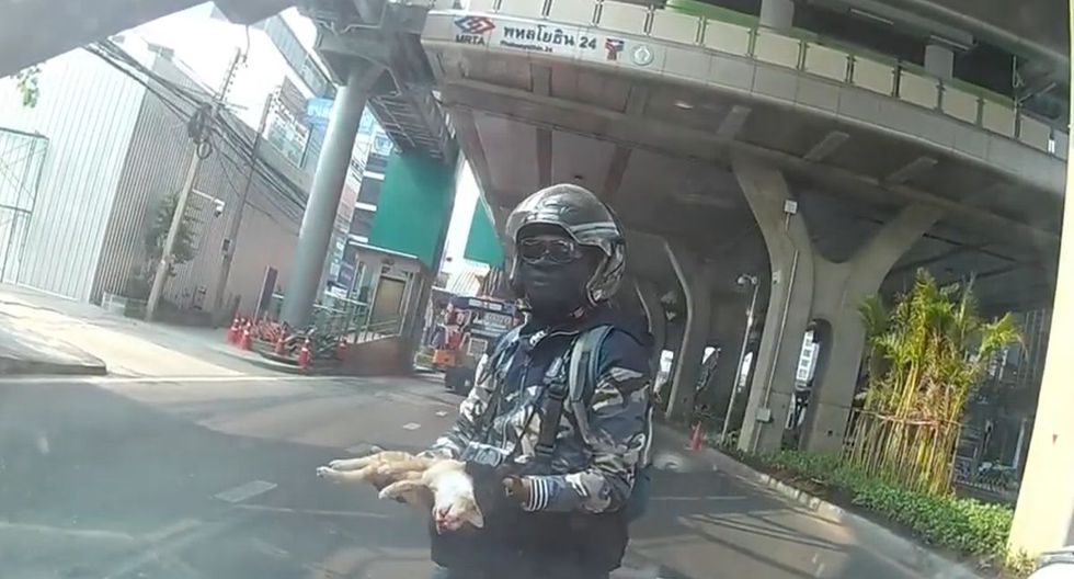 Un motorizado rescató en plena autopista a un gatito que previamente había sido atropellado   Captura de video YouTube / ViralHog