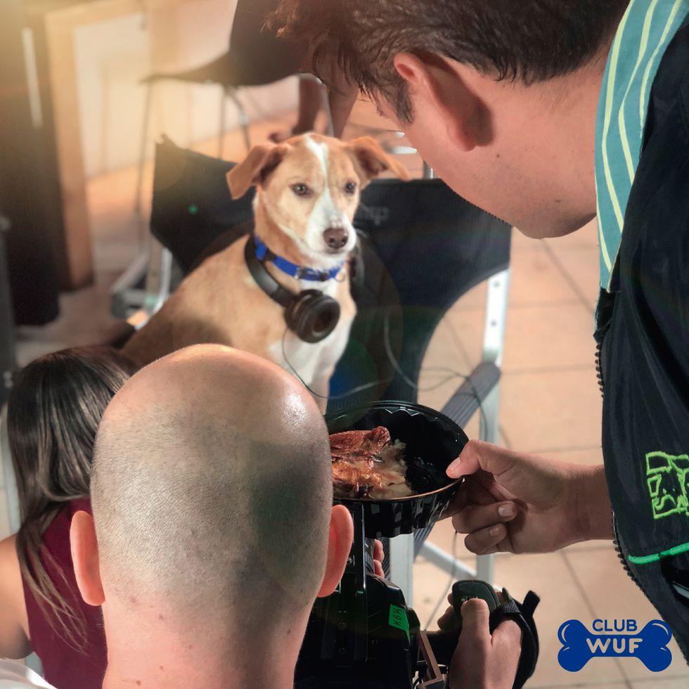 Sinchi pudo haber muerto cuando fue atropellado, pero gracias al cuidado de Milagros Perrunos hoy no solo camina, sino que promueve la adopción y el cuidado de perros.