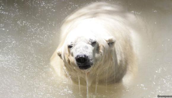La historia de Arturo, el último oso polar de Argentina