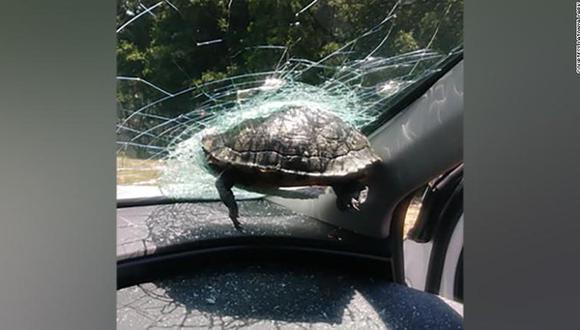 Una tortuga impacta el parabrisas de un auto y hiere a una mujer en una autopista de Florida. (CNN en Español).