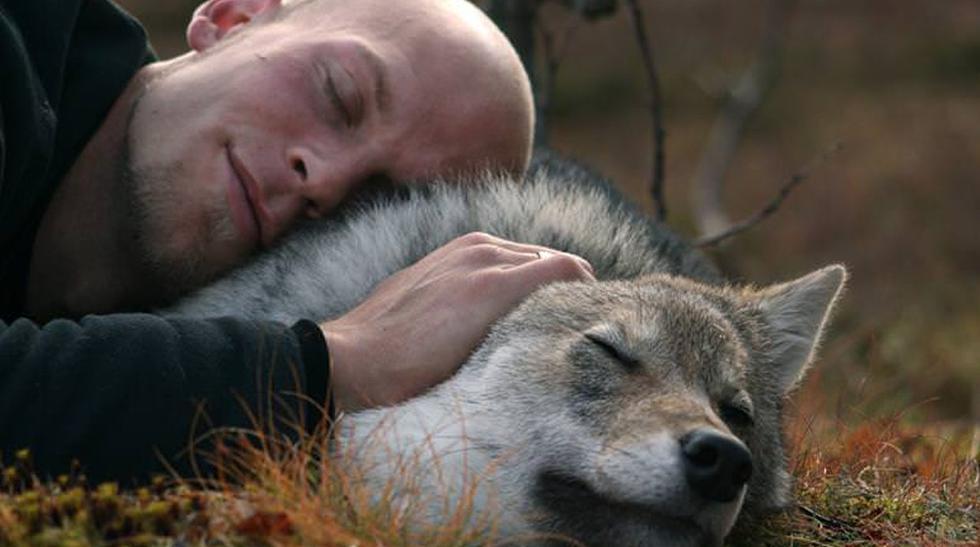 Interactúa con los lobos en este parque de Noruega - 1