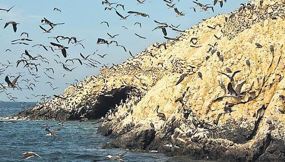 Invertirán unos US$10 mlls. para conservar las islas guaneras