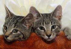Dos gatos traviesos comparten un divertido momento en el baño